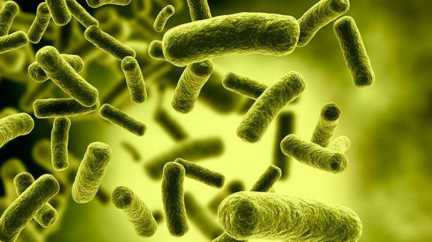 Fábricas da Carolina do Norte (EUA) fecham devido a temores da doença dos legionários (Legionella)