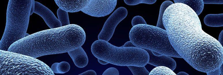 Como Prevenir e Eliminar a Bactéria Legionella